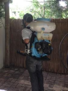 dengue-muggensbestrijding-224x300