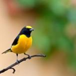 foto vogel