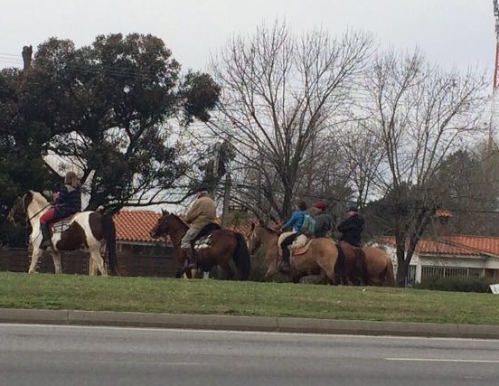 Overstekende paarden